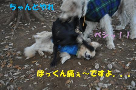 f0176830_20171059.jpg