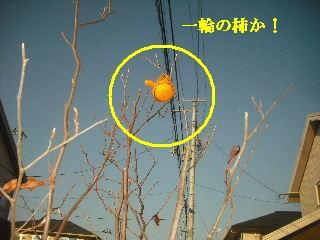 f0031037_20124764.jpg