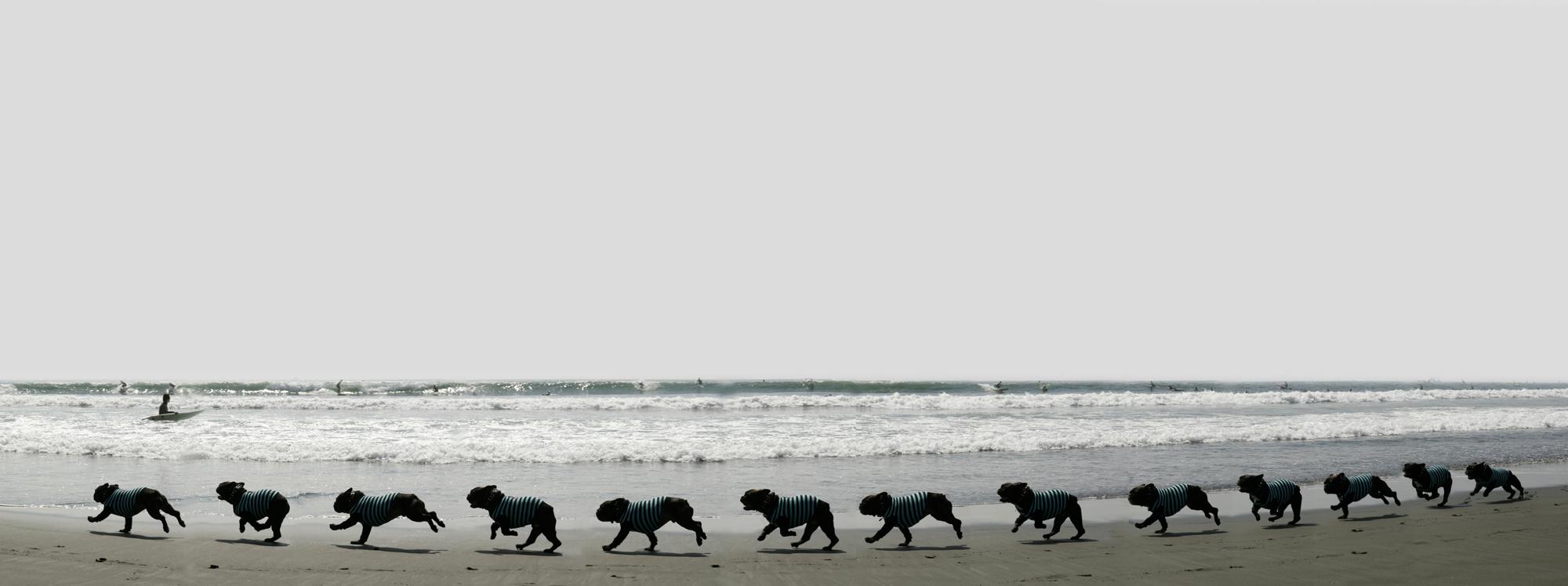 Dog Snapshot<2> 時間の流れ_c0035245_415589.jpg