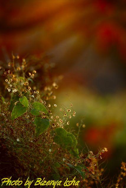 『秋の情景』_d0086248_20585198.jpg