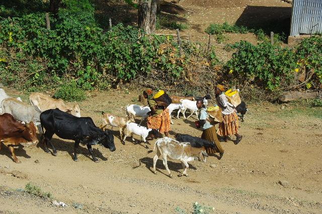 エチオピア(25) 水を汲み、水を運ぶ、コンソ族の女たち_c0011649_0194939.jpg