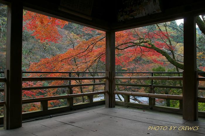 秋 「そうだ 京都行こう」 2010年_e0056449_2104898.jpg