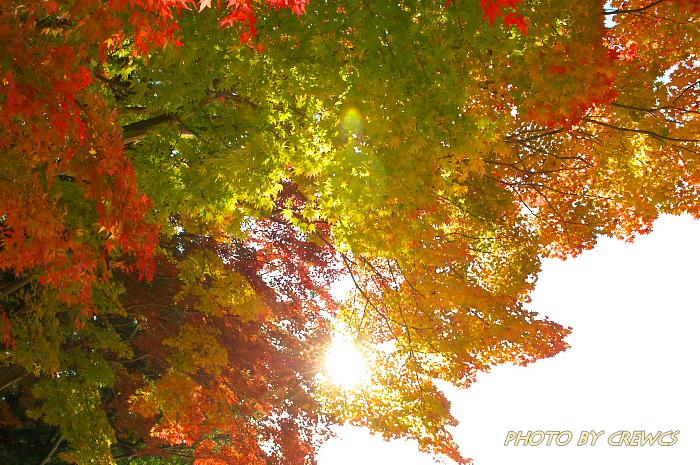 秋 「そうだ 京都行こう」 2010年_e0056449_2124749.jpg