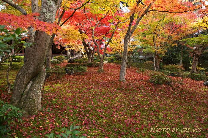 秋 「そうだ 京都行こう」 2010年_e0056449_2154825.jpg