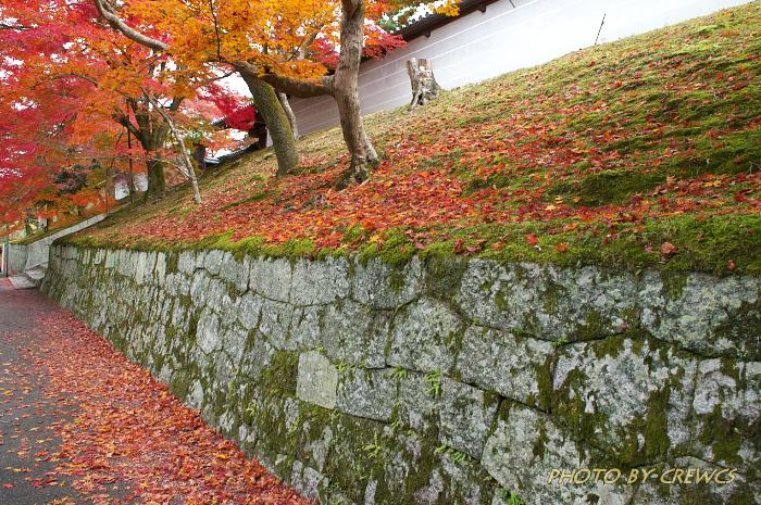 秋 「そうだ 京都行こう」 2010年_e0056449_2161254.jpg