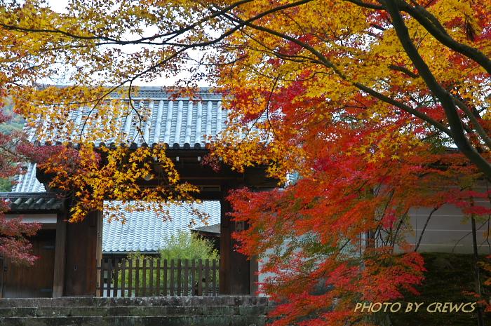 秋 「そうだ 京都行こう」 2010年_e0056449_2175625.jpg