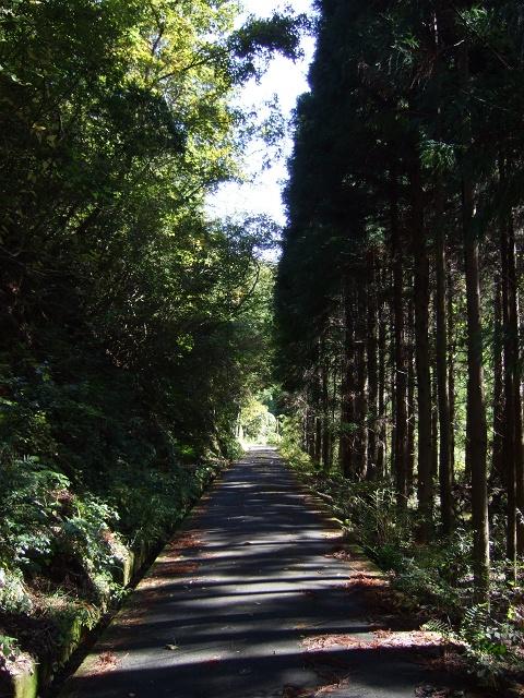 笹ヶ峠(阿戸~八本松町原)を歩く その1_b0095061_1255354.jpg