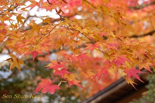 京都鷹峯の紅葉_a0164068_23204597.jpg