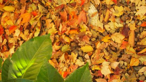 11/20  季節の食卓 tokinosyokutaku _b0207676_15363242.jpg