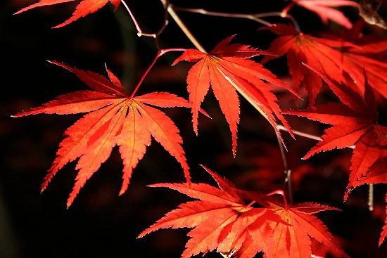紅葉見ナイトを楽しみました。_f0030085_21444148.jpg