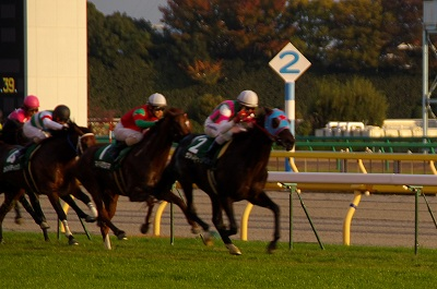 素晴らしい瞬発力!東京スポーツ杯2歳Sはサダムパテックが3馬身半差で圧勝!_b0015386_23232591.jpg