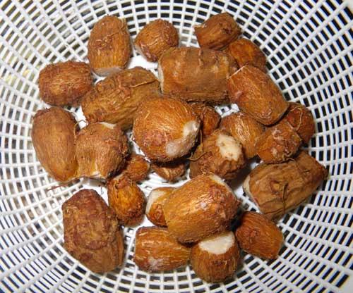 アピオスの収穫と・・・食べてみました(^^)_a0136293_1593037.jpg