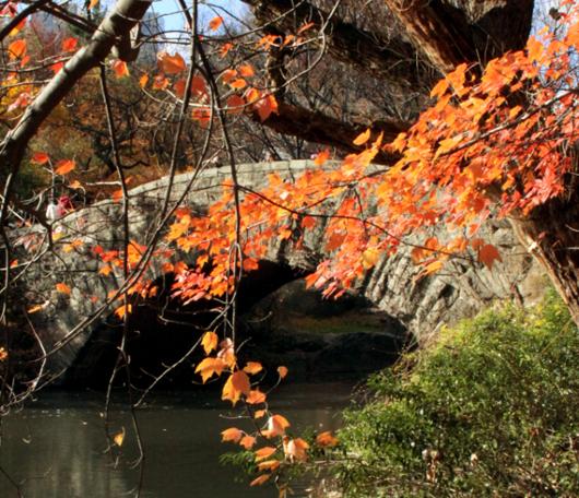 セントラルパーク紅葉お散歩コース (1) Pond周辺_b0007805_184757.jpg