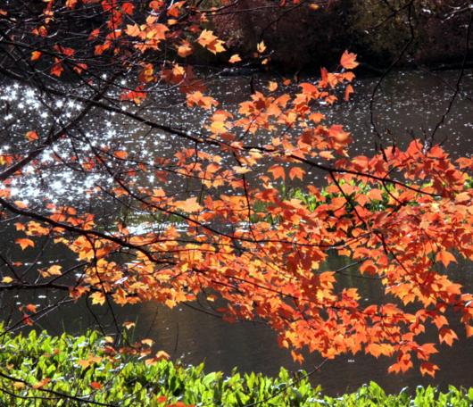 セントラルパーク紅葉お散歩コース (1) Pond周辺_b0007805_193255.jpg