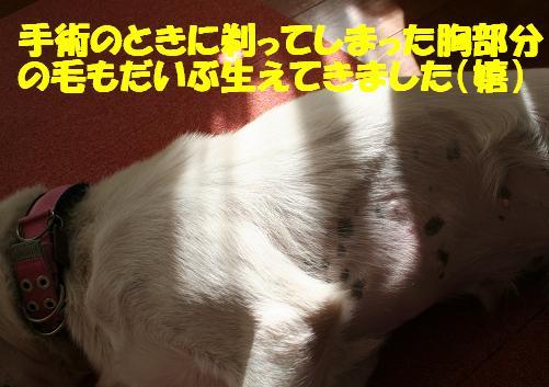 f0121712_129313.jpg