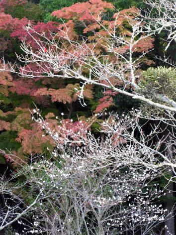 伊勢神宮 紅葉 散策 Ⅱ_f0129726_18182660.jpg