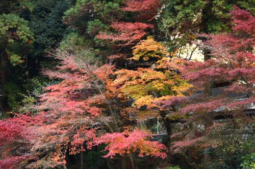御在所中道で紅葉を楽しむ_d0055236_0223744.jpg