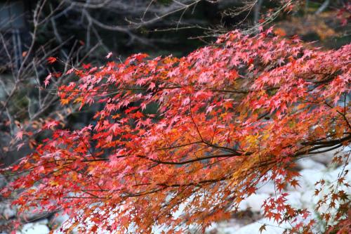 御在所中道で紅葉を楽しむ_d0055236_0283749.jpg