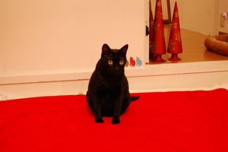 クリスマスカメラマン猫 空しぇるのぇるろった編。_a0143140_2184195.jpg
