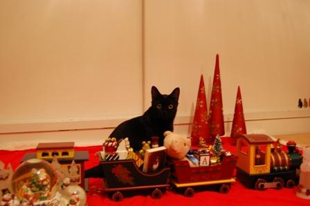 クリスマスカメラマン猫 空しぇるのぇるろった編。_a0143140_219176.jpg