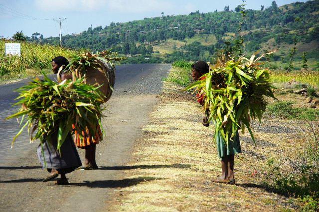 エチオピア(26) 荷を運ぶ、コンソ族の女たち_c0011649_7515891.jpg