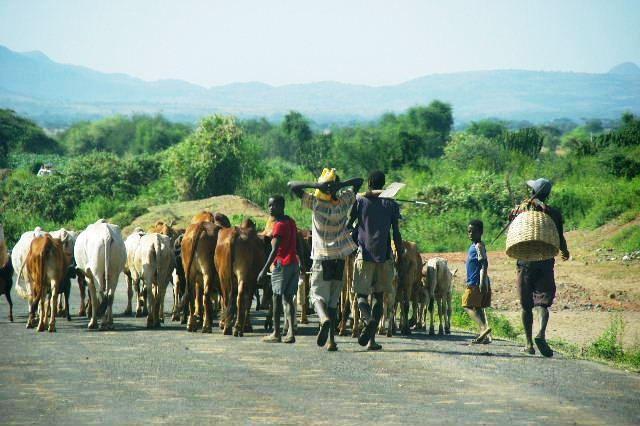 エチオピア(26) 荷を運ぶ、コンソ族の女たち_c0011649_757344.jpg