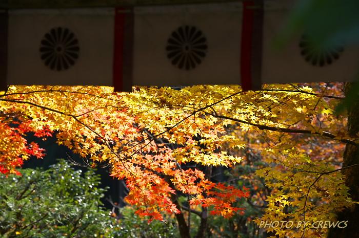 秋 「そうだ 京都行こう」 2010年_e0056449_20271184.jpg