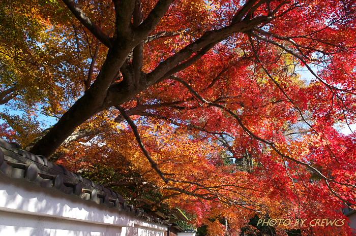秋 「そうだ 京都行こう」 2010年_e0056449_2028264.jpg