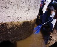 今川 2010.11.21「小さな命」救出作戦_f0197754_23103911.jpg