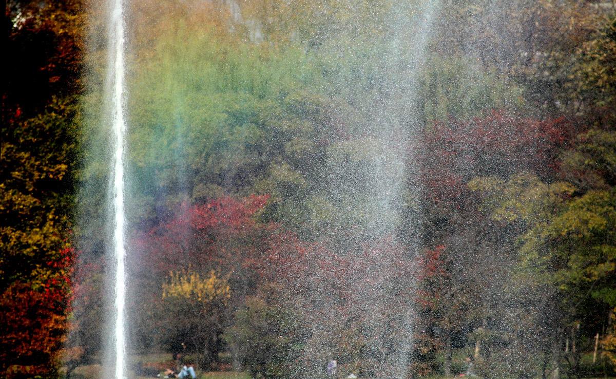 大阪バード フェスティバル_f0215767_1758769.jpg