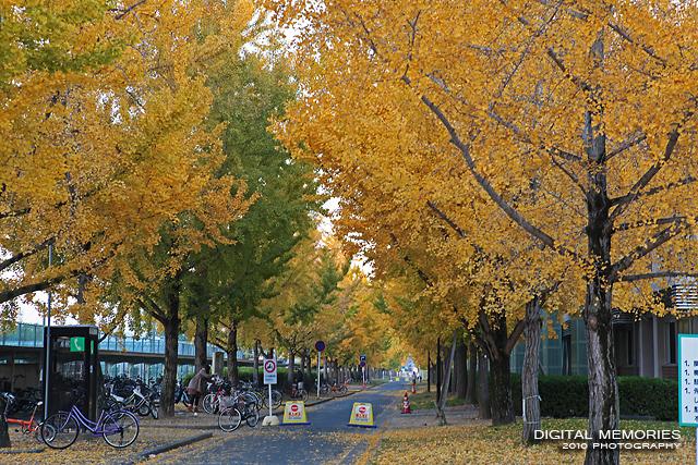 岡山大学 紅葉_c0083985_12272259.jpg