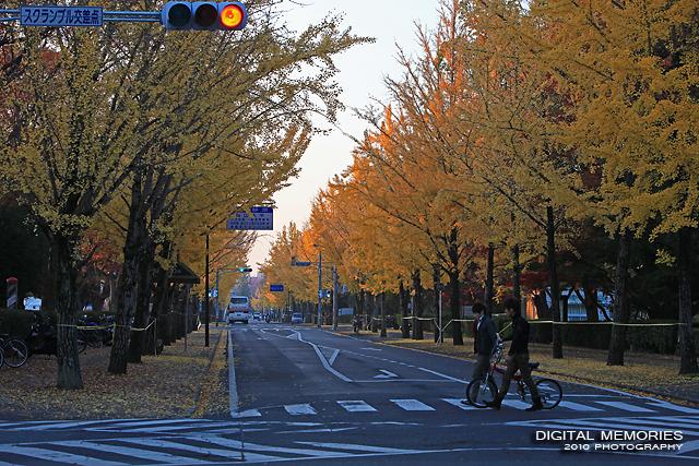 岡山大学 紅葉_c0083985_1231501.jpg