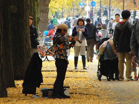 カワセミと、国営武蔵丘陵森林公園のアートイルミネーション_f0030085_1651275.jpg