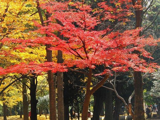 カワセミと、国営武蔵丘陵森林公園のアートイルミネーション_f0030085_16514660.jpg
