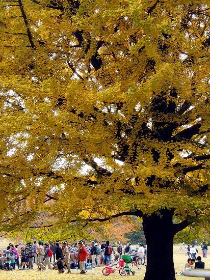 カワセミと、国営武蔵丘陵森林公園のアートイルミネーション_f0030085_165246.jpg