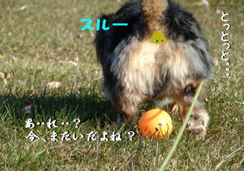 f0195891_17404374.jpg
