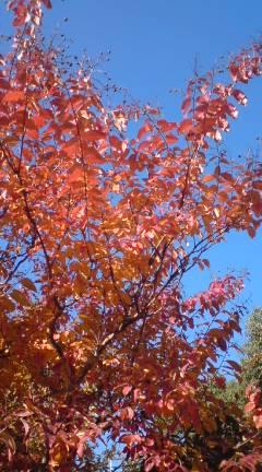 小さい秋みつけた_e0005507_19125011.jpg