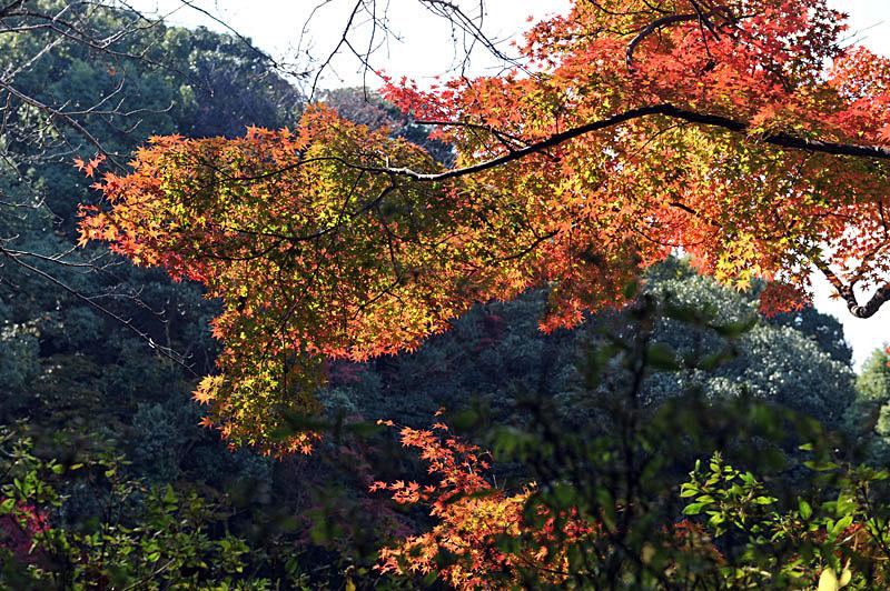 太宰府の紅葉 2010_a0042310_13475831.jpg