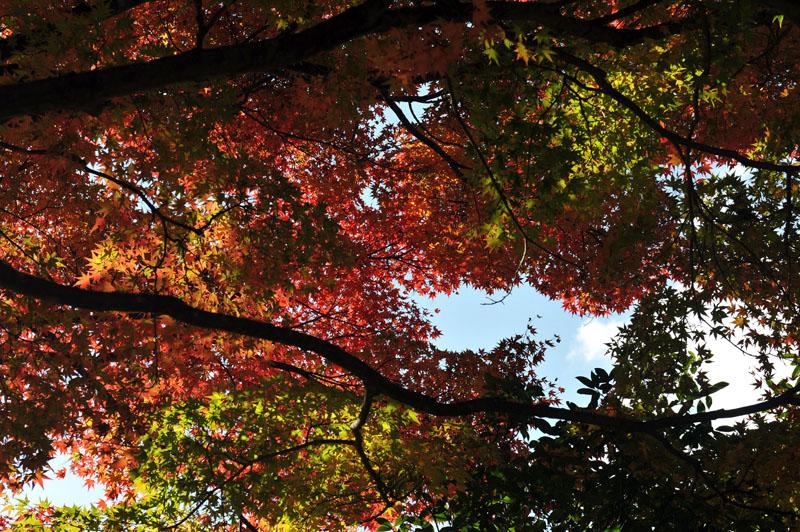 太宰府の紅葉 2010_a0042310_13483955.jpg