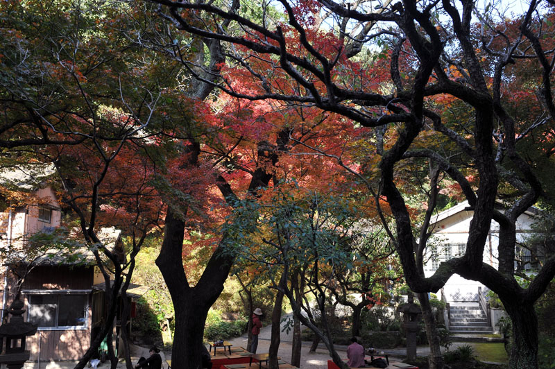 太宰府の紅葉 2010_a0042310_1350119.jpg