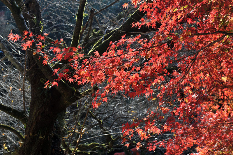 太宰府の紅葉 2010_a0042310_13501251.jpg