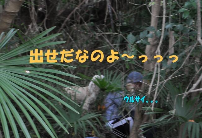 b0067012_2135289.jpg