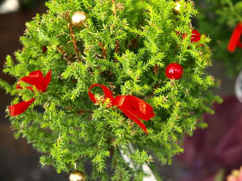 クリスマスの朝市パート3_b0136223_1830221.jpg