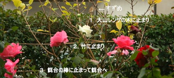 b0197433_14141831.jpg