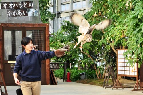 神戸花鳥園_b0151335_1004184.jpg
