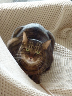 猫のお友だち みーくん編。_a0143140_21275385.jpg