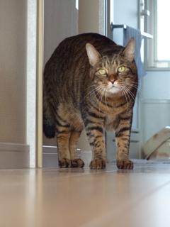 猫のお友だち みーくん編。_a0143140_21282268.jpg