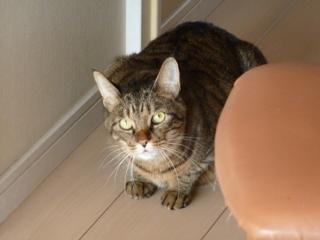 猫のお友だち みーくん編。_a0143140_21284442.jpg