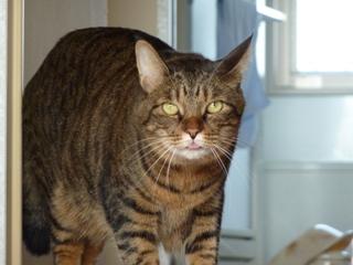 猫のお友だち みーくん編。_a0143140_2130247.jpg