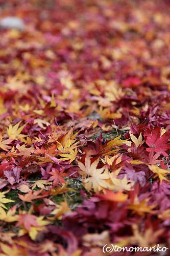 日本の紅葉の旅_c0024345_15131066.jpg